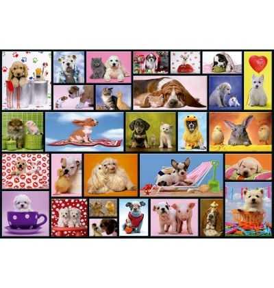 Comprar Puzzle 1000 piezas Momentos Compartidos Mascotas