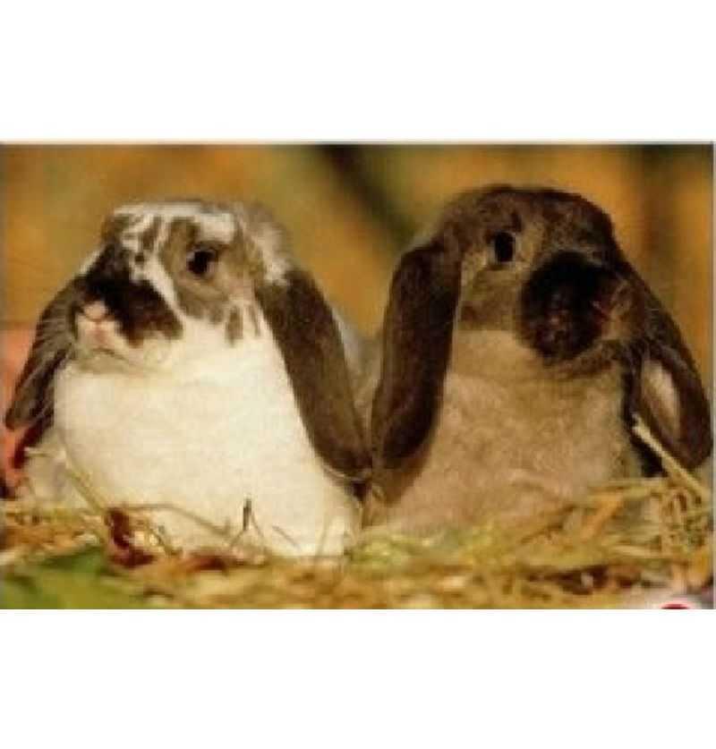 Comprar Puzzle 150 piezas Photo animales Conejo